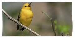 Prothonotary Warbler Singing Beach Towel