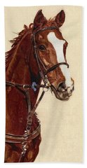 Proud - Portrait Of A Thoroughbred Horse Beach Sheet