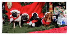 Pugs And Dachshounds Dressed As Father Christmas Beach Towel
