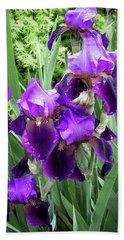 Purple Bearded Irises Beach Towel by Penny Lisowski