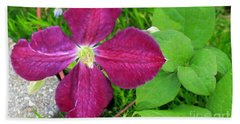 Purple Clematis In Bloom Beach Sheet