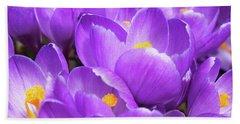 Purple Crocuses Beach Sheet