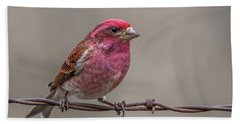 Beach Towel featuring the photograph Purple Finch On Barbwire by Paul Freidlund