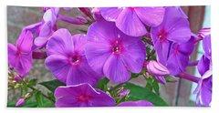 Purple Flame Phlox Beach Towel