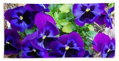 Beach Towel featuring the photograph Purple Pansies by Sandi OReilly