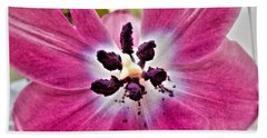 Beach Towel featuring the photograph Purple Tulip by Nina Ficur Feenan