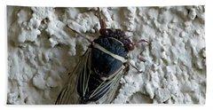Beach Sheet featuring the photograph Putnam's Cicada by Anne Rodkin