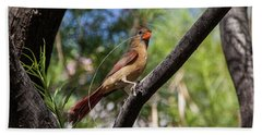 Pyrrhuloxia At Work Beach Towel
