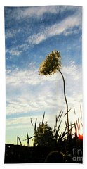 Queen Anne's Lace At Sunset Beach Towel
