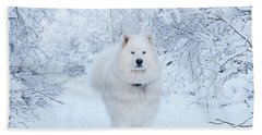 Quinn The Mighty Samoyed Beach Towel