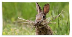 Rabbit Collector Square Beach Towel by Terry DeLuco
