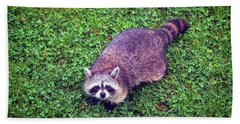 Beach Towel featuring the photograph Raccoon  by Kerri Farley