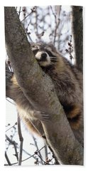 Afternoon Nap-raccoon Up A Tree  Beach Sheet