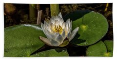 Radiant White Pond Lily  Beach Towel by Betty Pauwels