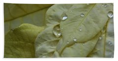 Rain Drops On A  White Poinsettia Beach Towel