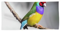 Rainbow Finch Beach Sheet