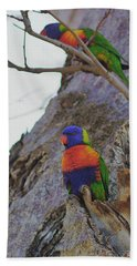 Rainbow Lorikeets Xiii Beach Towel by Cassandra Buckley