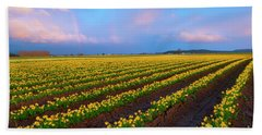 Beach Towel featuring the photograph Rainbows, Daffodils And Sunset by Mike Dawson