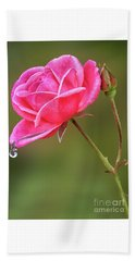 Raindrops On Roses Beach Towel