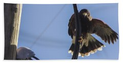 Beach Towel featuring the photograph Ramona Hawk 8 by Phyllis Spoor