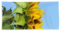 Reaching Sunflower Beach Towel