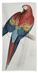 Red And Yellow Macaw  Beach Towel