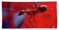 Beach Towel featuring the photograph Red Ant Macro by Jeff Folger
