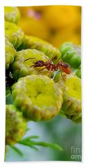 Red Ant Beach Towel