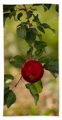 Beach Towel featuring the photograph Red Apple Ready For Picking by Donna Lee