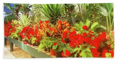 Red Begonias In The Glasshouse. Beach Towel