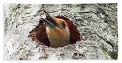 Red-bellied Woodpecker 03 Beach Towel by Al Powell Photography USA
