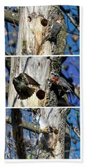 Red Bellied Woodpecker Harassed By A Starling Beach Towel