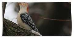 Red-bellied Woodpecker Beach Towel by Living Color Photography Lorraine Lynch