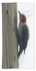 Red Bellied Woodpecker Beach Sheet