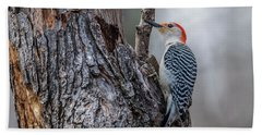 Beach Towel featuring the photograph Red Bellied Woody by Paul Freidlund