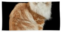 Red Big Adult Persian Cat Angry Sits And Turned Back On Black  Beach Towel
