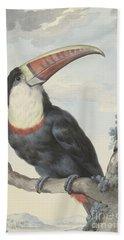 Red Billed Toucan, 1748  Beach Towel