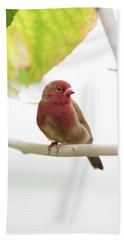 Beach Towel featuring the photograph Red Bird by Raphael Lopez