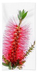 Red Bottle Brush Against An Overcast Sky Beach Sheet