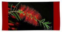 Beach Towel featuring the photograph Red Bottlebrush By Kaye Menner by Kaye Menner