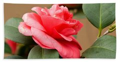 Red Camelliafresno Ca Beach Towel