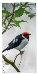 Red Capped Cardinal 2 Beach Towel