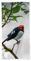 Red Capped Cardinal Beach Towel