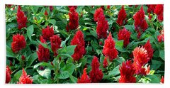 Beach Towel featuring the photograph Red Celosia Garden by Glenn McCarthy Art and Photography