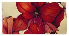 Red Christmas Amaryllis Beach Towel