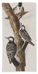 Red-cockaded Woodpecker Beach Towel by John James Audubon