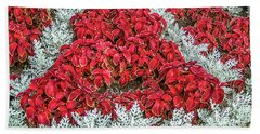 Beach Towel featuring the photograph Red Coleus And Dusty Miller Plants by Sue Smith