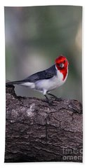 Red Crested Posing Beach Towel