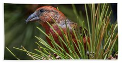 Red Crossbill Beach Towel by Michael Cunningham