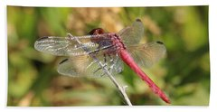 Red Dragonfly Beach Towel
